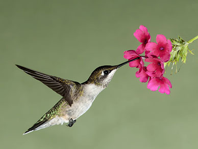 Hummingbird Jeffry Weicher Productions